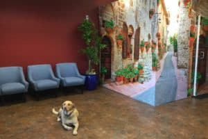 Roseville Diagnostic Hearing Center lobby with mischa